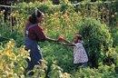 Como comercializar producción de cosecha propia