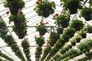 Cómo hacer dinero cultivando verduras en invernaderos