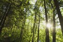 ¿Cuánto gana un escalador de árboles?