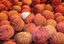 The Nutrition in Lychee Fruit