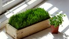 How to Start Your Own Wheatgrass Business