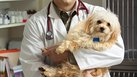 What Is the Mid-Range Salary for a Veterinarian?
