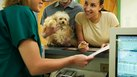 How to Get a Receptionist Job in a Vet Hospital