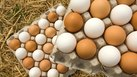 How Many Eggs Per Day Is Healthy?