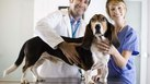 Training Needed to Be a Vet Tech