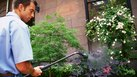 How to Become a Commercial Landscaper