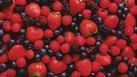 Can Eating Strawberries & Blueberries Help You Lose Weight?