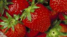 Store Procedures for Selling Strawberries