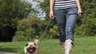 [Pet Sitter] | How to Get Started As a Pet Sitter