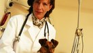 What Professional Options or Specialties Are There for Veterinarians?