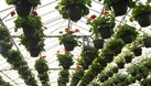 How to Make Money Growing Vegetables in Greenhouses