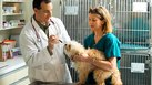 Courses to Take to Become a Veterinarian Assistant