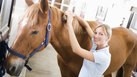 Equine Massage Therapy Certification Programs