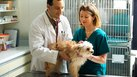 Difference Between a Veterinarian & a Veterinarian Technician