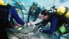 Can Chemistry Majors Become Marine Biologists?
