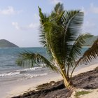 Cómo ir de isla en isla en el Caribe