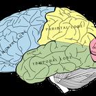Características de personas que usan el lado izquierdo del cerebro