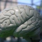 ¿Cuáles son los tratamientos para la atrofia cerebral?