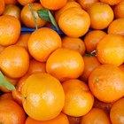 ¿Cuándo debo recoger naranjas del árbol?
