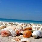 ¿Cuál es el significado de las conchas marinas?