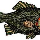 Cómo hacer un pez en 3D