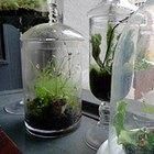 Cómo hacer un ecosistema en una botella