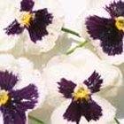 Cómo conservar flores con glicerina