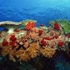 Cómo tratar las picaduras de coral