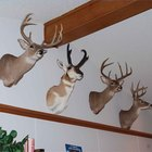 How to Hang a Deer Mount