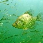 How to Build Crappie Fish Attractors