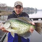 How to Attract Crappies