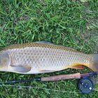 How to Prepare Corn Pops for Carp Fishing