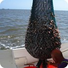 The Best Time & Place to Catch Shrimp on the Texas Coast