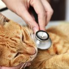 The ABCs of Pet Insurance