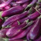 Brining Eggplants
