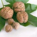 How to Carmelize Walnuts