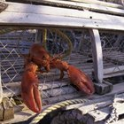 How Does a Lobster Trap Work?
