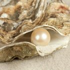 Facts on Pearl Diving