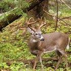 Official Texas Deer Hunting Laws