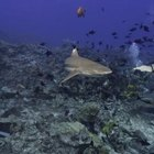 What Sharks Live Off the Coast of Galveston, Texas?
