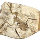 El uso de fósiles para determinar el registro de eventos