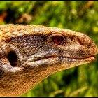 Cómo atrapar a un lagarto en un medio silvestre
