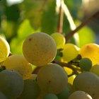 Los efectos secundarios del aceite y el extracto de las semillas de uva