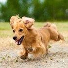 Cuál es la composición química de la orina de un perro