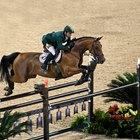 Ungüentos para el dolor de las articulaciones inflamadas de los caballos