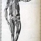 Propósito de la mecánica corporal
