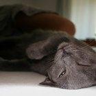 Medicación para sedar a un gato