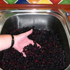 How to Measure Blackberries Whole or Crushed for Jam