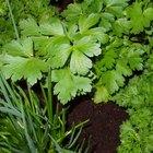 Tipos de remedios de hierbas