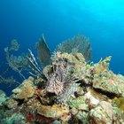 Características bióticas y abióticas de los arrecifes